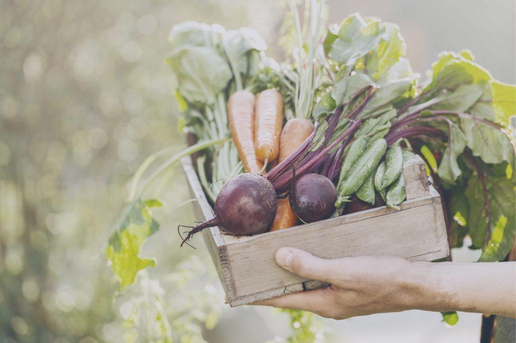 panier de légumes, ingrédients durables et de qualité